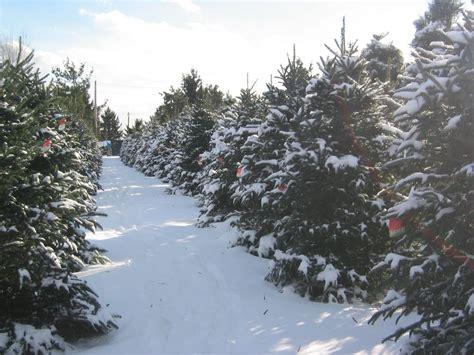 medina christmas tree farm medina oh yelp