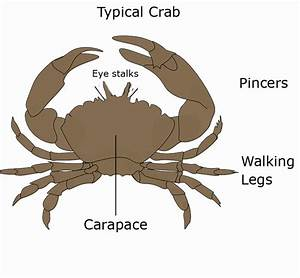 Different Types Of Crab  With Pictures