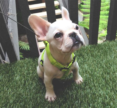 Artificial Grass For Dogs By Artificial Grass Liquidators. Industrial Cage Light. Durable Flooring. Leather Wingback Recliner. Foyer Light. Juvenile Recliner. Girly Rooms. James Hardie Siding Colors. Mirror Desk