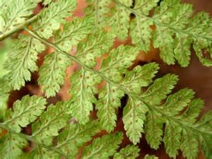 Vascular Nonvascular Plants