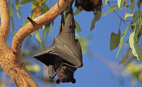 images  facts  misunderstood bats mnn