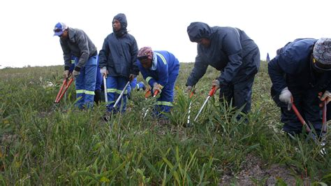 siege botanic can conservation provide water for cape town in a of
