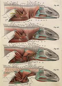 Lizard Muscles Pin It In 2019