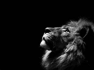 Lion Black Background - Wallpaper #30954