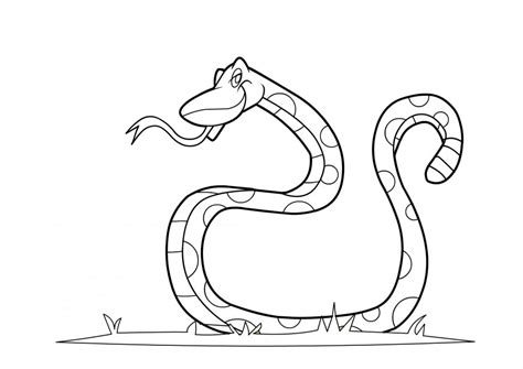 rattlesnakes coloring pages   print