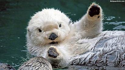 Otter Animals