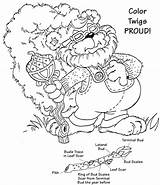 Twig Colouring Pages Coloring Printablecolouringpages Larger Credit sketch template