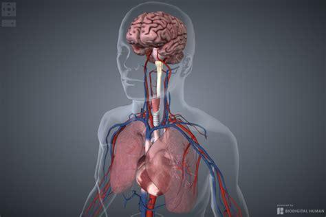 une start up mod 233 lise le premier corps humain 100 interactif