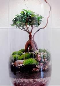 Terrarium Plante Deco : cr er un terrarium de no l avec des plantes d 39 int rieur ~ Dode.kayakingforconservation.com Idées de Décoration