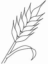 Coloring Pages Autumn Wheat Colouring Coloringpagebook Printable Başak Crafts Crops Easily sketch template