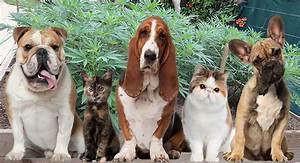 Claws And Effect  Cannabis Medicine For Pets