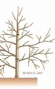 Wann Apfelbäume Schneiden : 626 best garten images on pinterest garten nursing care ~ Lizthompson.info Haus und Dekorationen