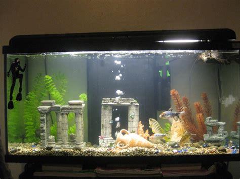 ecrevisse aquarium eau douce aquarium eau douce ecrevisse 28 images crabes crevettes et 233 crevisses des crustac 233 s
