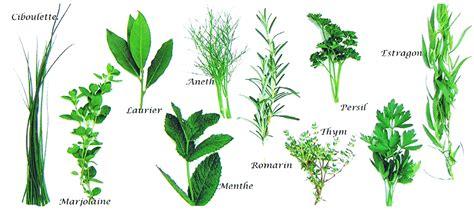 plante aromatique cuisine le jardinoscope coté pratique les bons gestes à faire au jardin page 52 le jardinoscope