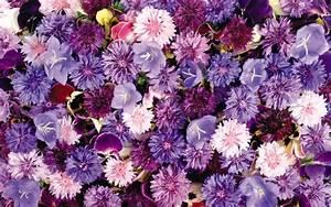 Full Hd Of Lots Violet Flowers Screen Wallpaper Flower ...