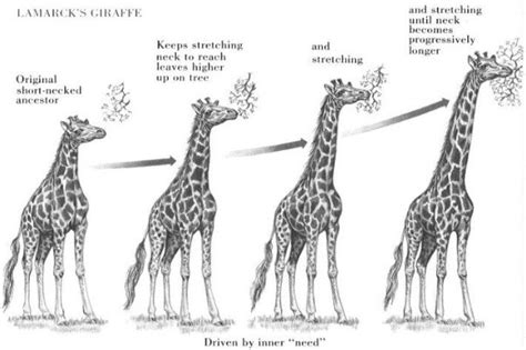 Biology Could Life Have Evolved As Described By Lamarck