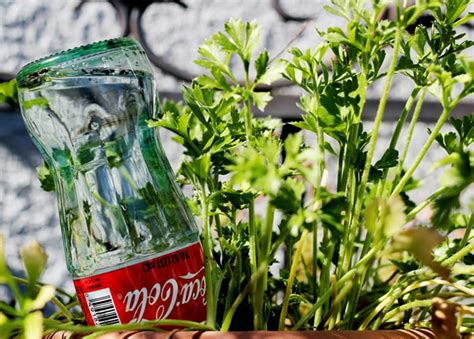 reuse glass bottles  watering globes   plants
