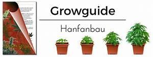 Bohnen Anbauen Anleitung : hanfanbau cannabis anbau anleitung hanf growguide irierebel ~ Whattoseeinmadrid.com Haus und Dekorationen