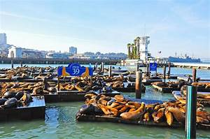 What to do on a Visit to PIER 39
