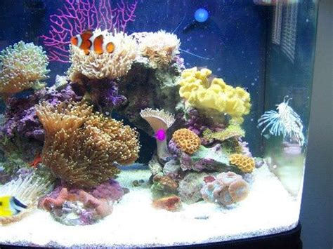 nano marine aquarium setup 10 best images about saltwater aquariums on marine tank and salts