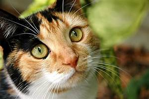 Free Calico cat outside Stock Photo - FreeImages.com