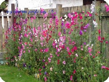 Sweet Peas, Sweet And Search On Pinterest
