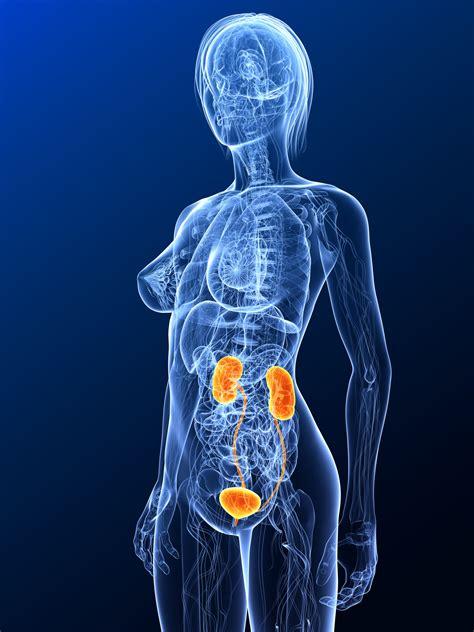 ultraschalluntersuchung  der urologie
