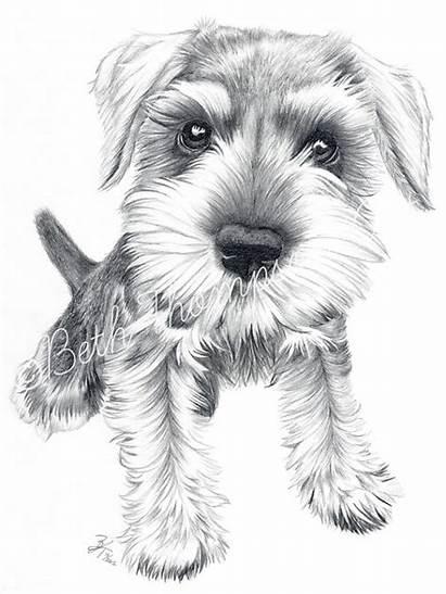 Schnauzer Miniature Drawing Dog Drawings Schnauzers Schnozz