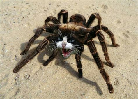 Image result for strange weird real animals (With images