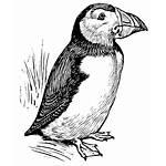 Puffin Vector Clip Clipart Iceland Line Bird