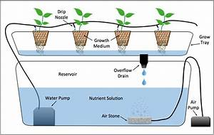 Diagram Of A Drip System Hydroponic Setup