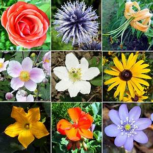 kinds of flowers in the world