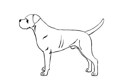 Disegni Cani Per Bambini Disegnare Un Gatto Per Bambini Uu44