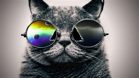 cat wallpapers   cell phone cat galaxy