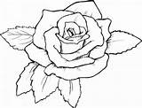 Coloring Roses Adults sketch template