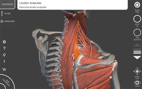 Amazoncom Muscular System  3d Atlas Of Anatomy