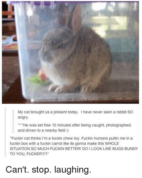 Angry Bunny Meme - 25 best memes about carrots carrots memes