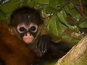 cute-baby-monkey   Baby Animal Zoo