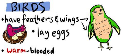 The English Cubby: Vertebrates classification
