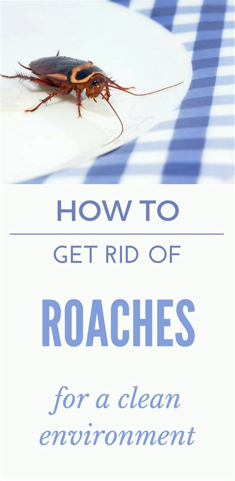 how to get rid of cockroaches in kitchen cabinets how to get rid of roaches in the bathroom how to get rid