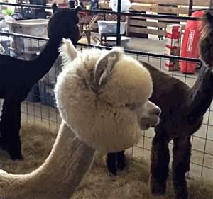 cute animal gif on Tumblr