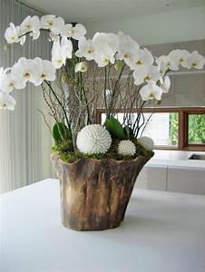 Orchideen Im Glas Dekorieren : pin von aga auf w szkle indoor pflanzen dekor ~ Watch28wear.com Haus und Dekorationen