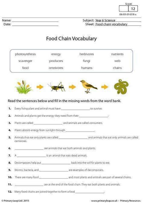 food chain worksheet year 7 rcnschool