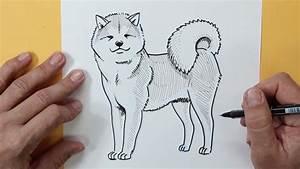 Cómo dibujar un Akita (Raza de perro) - How to draw an ...
