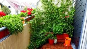 Pflanzen Für Balkon : heilkr uter auf dem balkon pflanzen frag mutti ~ Sanjose-hotels-ca.com Haus und Dekorationen