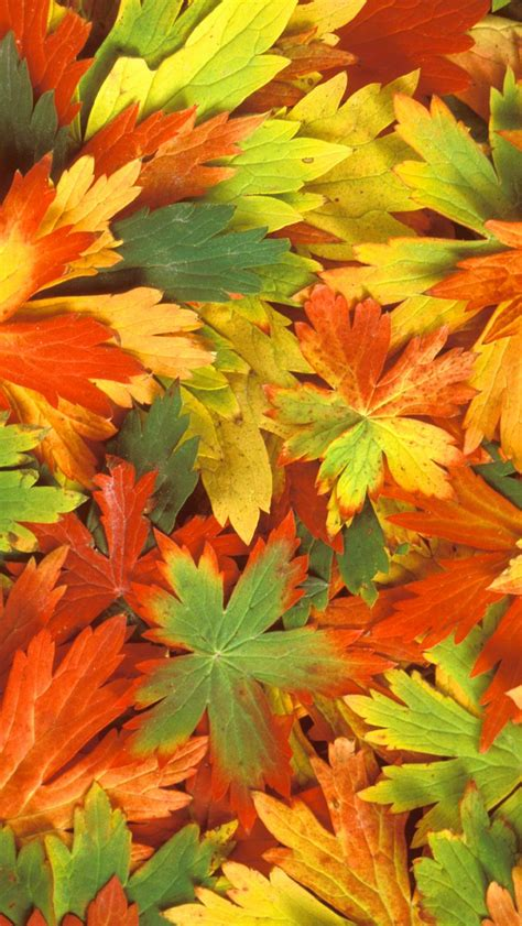wallpaper for iphone 5s fall leaves iphone wallpaper hd 2926