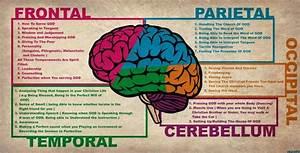 Human Brain Diagram Lobes