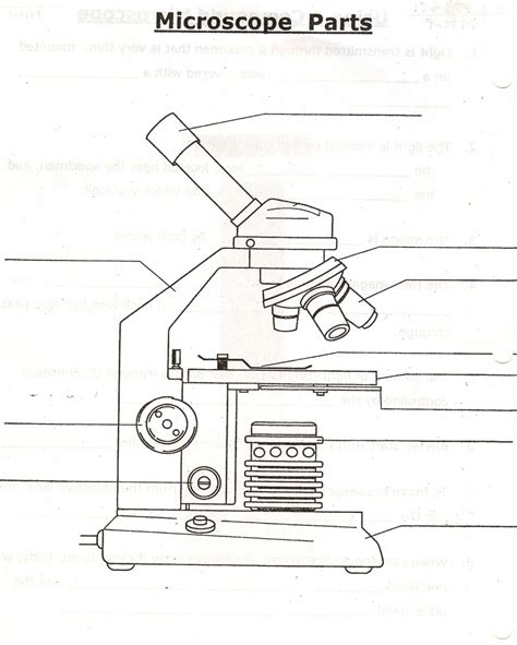 Microscope Quiz Quizlet Parts Of The Microscope Quizlet 5 Parts Of The