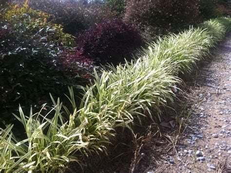 pin  plantsbymailcom  tips   diy gardener