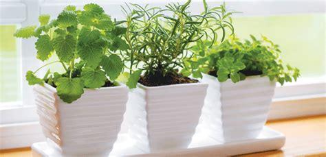 Your Indoor Herb Garden  Alive